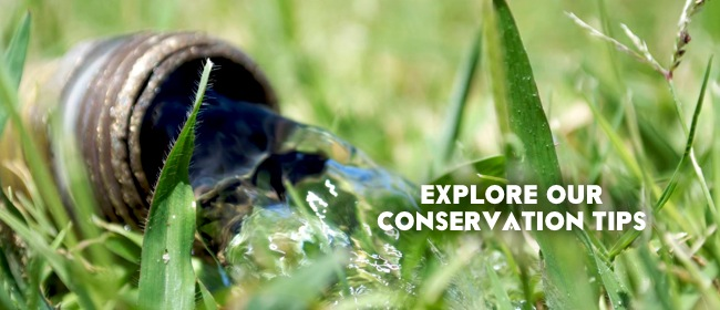 Explore our Conservation Tips
